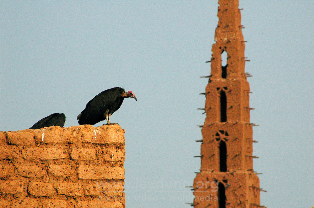 """BURKINA FASO, Bani, 2007. Vultures loom over the empty courtyard of the """"Grand Mosquee"""" in Bani."""