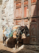 A saddled donkey waits by an old door in Place Seffarine in Fes, Morocco
