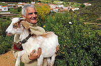 Domestic goats eating bush<br /> , Salamanca Region, Castilla y León, Spain