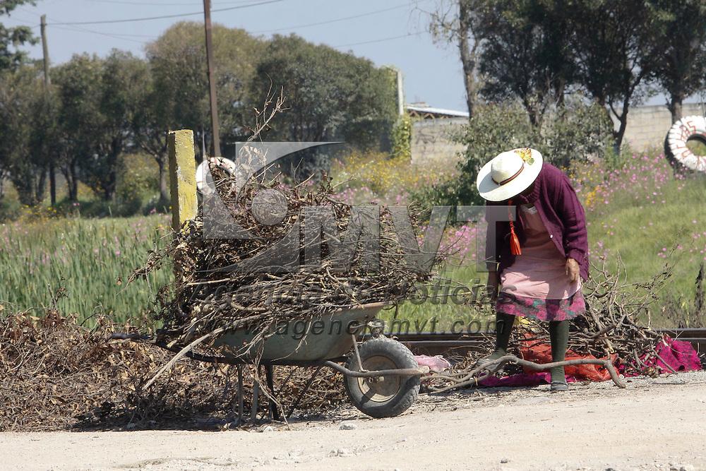 TOLUCA, México.- Mujeres aprovechan las ramas  que salen de la poda de los arboles de la carretera Toluca-Palmillas,   como leña para poder cocinar en sus hogares. Agencia MVT / Crisanta Espinosa. (DIGITAL)