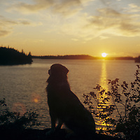 CANADA, ONTARIO. Dog (PR) & sunset over Lake of the Woods, southeast of Kenora.