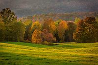 Autumn foliage and late day light, Sparrow Farm, E. Montpelier, VT