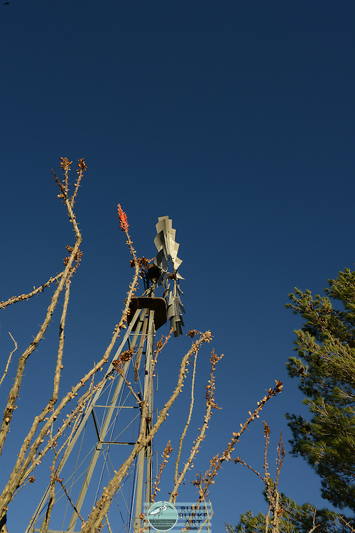 Windmill and blooming cactus in Marathon, Texas-vertical