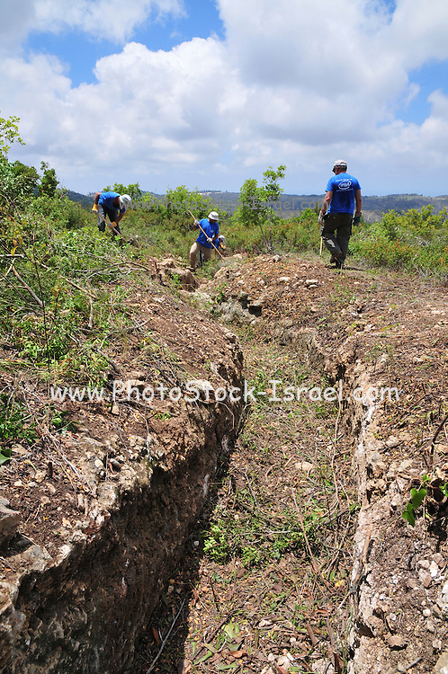 Israel, Mount Carmel, Massada on the Carmel a stronghold built by the Jewish settlement in 1942 in anticipation of a German invasion of Palestine. Intel Volunteers clear forest overgrowth from the site