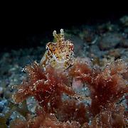 Dive Spot: Algea Patch