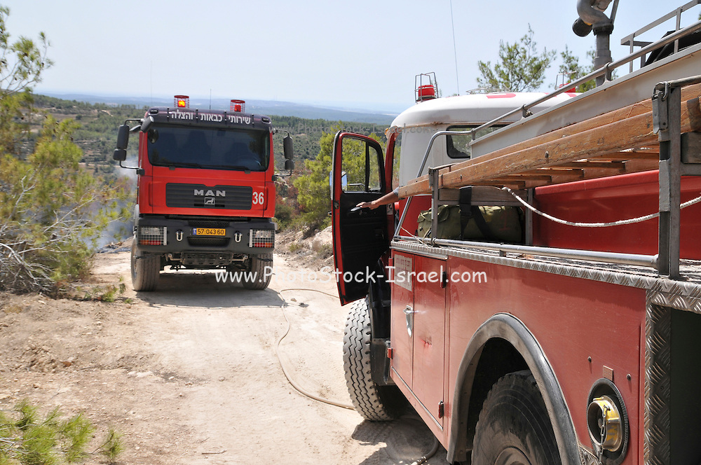 Israel, Carmel Mountain, Shekef Forest, Fire fighters extinguishing a forest fire started by arson September 12th 2009