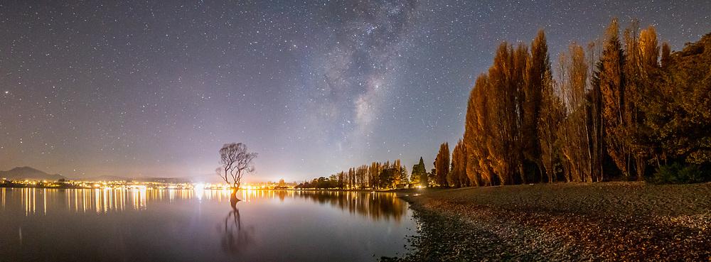 Wanaka Tree astro photography
