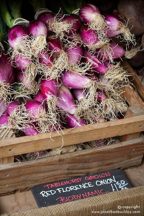 Onion 'Long Red Florence'. Also called Rouge de Florence, Rossa di Firenze, Rossa Lunga di Firenze, Rossa di Toscana, Long de Florence Simane, Florence Simiane, Italian Torpedo or Italian Red Torpedo
