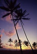 Sunset with coconut palm trees<br />