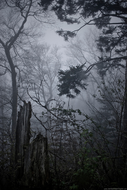 In the Smokey Mountains the fog is thick like smoke.