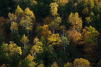 a tapestry of fall color graces the forest canopy along the slopes of cascade mountain near lake placid in the adirondacks, new york