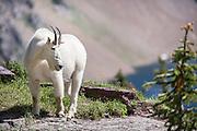 Logan Pass Hidden Lake Trail at Glacier National Park