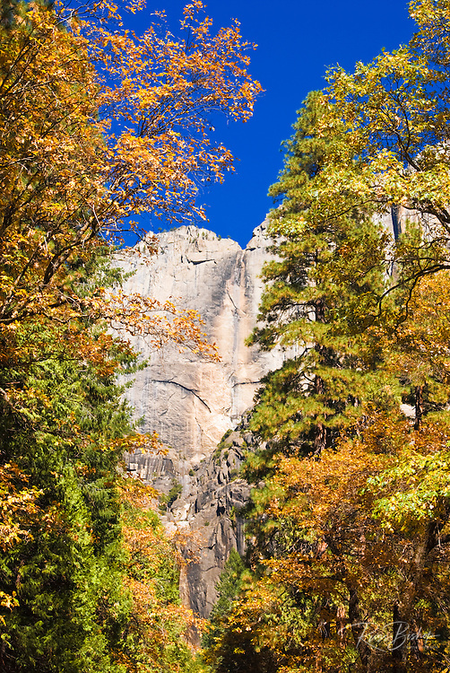 Yosemite Falls and fall color, Yosemite National Park, California
