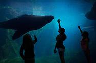 The Alaska SeaLife Center, aquarium and marine mammal rehabilitation facility, Resurrection Bay, Seward, Alaska, USA<br /> <br /> The Alaska SeaLife Center, Seward, Alaska, USA<br /> <br /> Photographer: Christina Sjögren<br /> <br /> Copyright 2019, All Rights Reserved