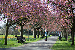 April 3, 2017 - London, London, UK - People enjoying sunny weather in Greenwich Park today. Credit : Rob Powell/LNP (Credit Image: © Rob Powell/London News Pictures via ZUMA Wire)