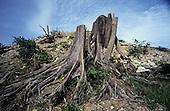 Cash Crops Deforestation Malaysia