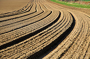 Lines in field brown soil ready for cultivation, Shottisham, Suffolk, England, UK