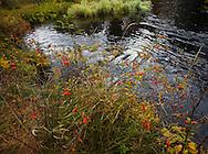 Fall colors on the Metolius River near Camp Sherman, Oregon.
