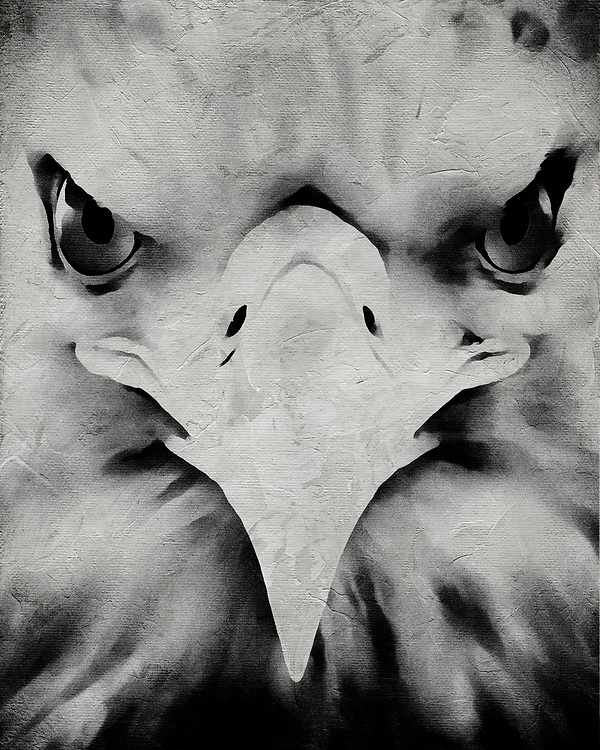 When you look upon this fine art illustration of an eagle by Jan Keteleer, one can be left with a feeling of determination. Simply by looking deeper into this the details of this powerful animal, we can get a sense of why many see the eagle as a symbol of such. Suitable for anyone who loves such ideas, or simply animals. –<br /> <br /> BUY THIS PRINT AT<br /> <br /> FINE ART AMERICA<br /> ENGLISH<br /> https://janke.pixels.com/featured/portrait-of-an-eagle-jan-keteleer.html<br /> <br /> WADM / OH MY PRINTS<br /> DUTCH / FRENCH / GERMAN<br /> https://www.werkaandemuur.nl/nl/shopwerk/Portret-van-een-arend/500140/132
