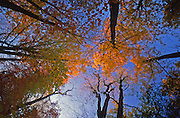 PA landscapes, Autumn foliage, forest and sky