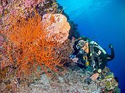 Red soft coral at Gabriella's Fish Point, Tufi, Papua New Guinea