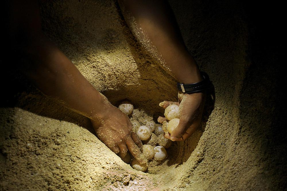 08/Septiembre/2014 Cabo Verde. Boa Vista.<br /> Un técnico de Bios recoge los huevos de una tortuga Carettha en la playa para trasladarlos a un vivero seguro.<br /> <br /> © JOAN COSTA