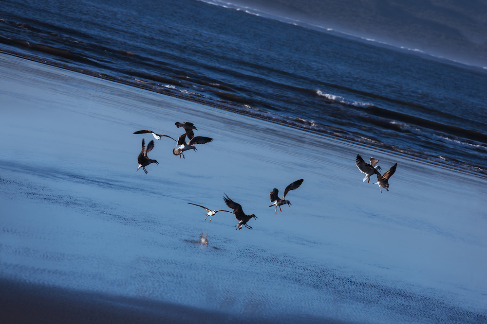 Seagulls fly at the beach of Essaouira, Morocco.