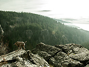 View from Cougar Canyon to Flathead Lake