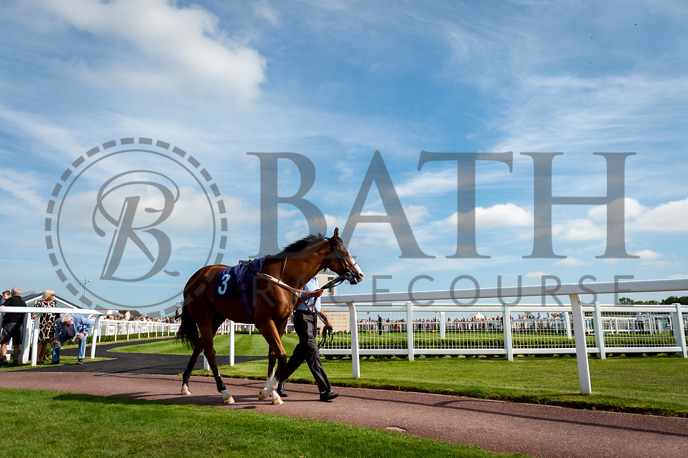 Airbrush ridden by Pat Dobbs and trained by Richard Hannon in the Visit Valuerater.Co.Uk Nursery Handicap race.  - Ryan Hiscott/JMP - 15/09/2019 - PR - Bath Racecourse - Bath, England - Race Meeting at Bath Racecourse