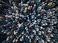 Aerial view of an Estonian forest covered with snow during winter.
