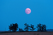 Full moon rising and trees<br /> Elm Creek<br /> Manitoba<br /> Canada