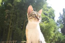 Cats in park, Fes al Bali medina, Fes, Morocco