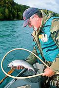 Alaska. Kenai Peninsula. Kenai River. Fly fisher with dolly varden char. Driftboating. PLEASE CONTACT US FOR DIGITAL DOWNLOAD AND PRICING.