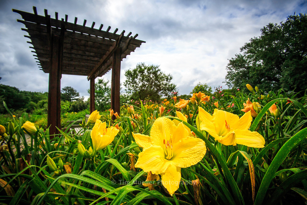 Irises bloom at BREC's Independence Park Botanic Gardens in Baton Rouge, La.
