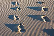 Kelso Dunes, Mojave National Preserve, near the town of Baker, in San Bernardino County, California, USA.