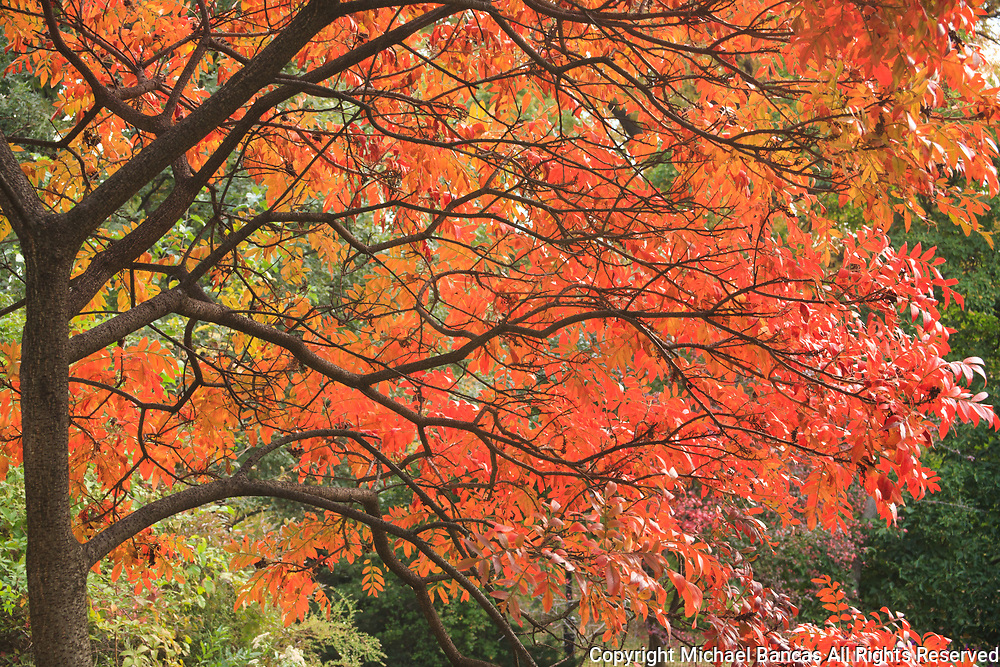 Fall color walking in Central Park in Manhattan, New York City