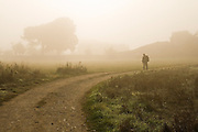 A pilgrim walks along a dirt road through mist across a field, on the Camino de Santiago between Sarria and Portomarin, Galicia, Spain.