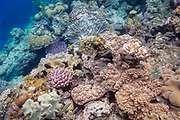 Tropical coral reef - Agincourt reef, Great Barrier Reef, Queensland, Australia. <br /> <br /> Editions:- Open Edition Print / Stock Image