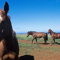 Hawaii, Molokai Ranch