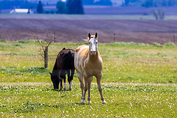 A horse stands in a pasture