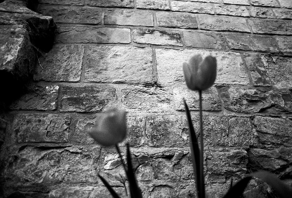 """""""Tulips at Prague Castle"""" - photograped by Mario Bihari. Mario is a well known blind Roma musician originally from Slovakia living since he finished his studies in Prague, Czech Republic. Beside being a very talented multi-instrumentalist working as a professional musician he is also experimenting with photography as a another way to express himself."""