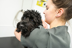 A dog is held and comforted by a nurse at Rushcliffe Veterinary Centre, West Bridgford, Nottingham, UK.<br />