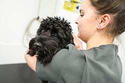 A dog is held and comforted by a nurse at Rushcliffe Veterinary Centre, West Bridgford, Nottingham, UK.<br /> Photo: Ed Maynard<br /> 07976 239803<br /> www.edmaynard.com
