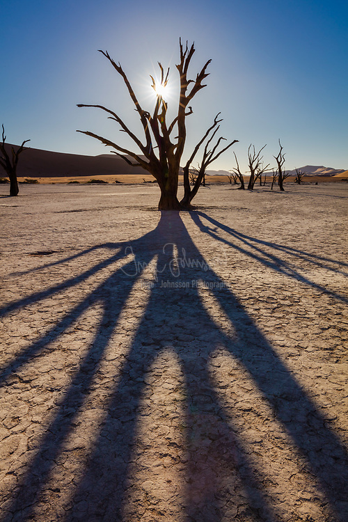 "Deadvlei is a white clay pan located near the more famous salt pan of Sossusvlei, inside the Namib-Naukluft Park in Namibia. Also written DeadVlei or Dead Vlei, its name means ""dead marsh"" (from English dead, and Afrikaans vlei, a lake or marsh in a valley between the dunes). The pan also is referred to as ""Dooie Vlei"" which is the (presumably original) fully Afrikaans name. <br /> <br /> Dead Vlei has been claimed to be surrounded by the highest sand dunes in the world, the highest reaching 300-400 meters (350m on average, named ""Big Daddy"" or ""Crazy Dune""), which rest on a sandstone terrace.<br /> <br /> The clay pan was formed after rainfall, when the Tsauchab river flooded, creating temporary shallow pools where the abundance of water allowed camel thorn trees to grow. When the climate changed, drought hit the area, and sand dunes encroached on the pan, which blocked the river from the area.<br /> <br /> The trees died, as there no longer was enough water to survive. There are some species of plants remaining, such as salsola and clumps of !nara, adapted to surviving off the morning mist and very rare rainfall. The remaining skeletons of the trees, which are believed to have died 600-700 years ago (1340- 1430), are now black because the intense sun has scorched them. Though not petrified, the wood does not decompose because it is so dry."