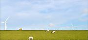 Nederland, Groningen, 15-4-2015Lente in de provincie Groningen. Schapen en lammetjes, lammeren, grazen op de groene dijken rond de eemshaven. In dit havengebied, industriegebied, staan veel bedrijven die met energieproductie te maken hebben zoals ruim 90 windmolens die wekken groene stroom op. Windenergie,windmolenpark.FOTO: FLIP FRANSSEN/ HOLLANDSE HOOGTE