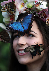 Model Jessie May Smart with Blue Morpho, great Yellow Morman and Giant Owl butterflies during a photocall for RHS Garden Wisley's Butterflies in the Glasshouse exhibition in Woking, Surrey.