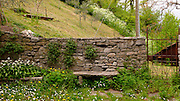Wild flowers grow near a stone wall and bench in Varenna, Italy.