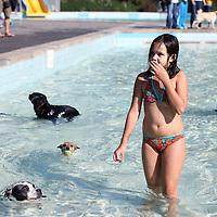 Nederland, Amsterdam , 28 september 2011..Hondenzwemmen in het mirandabad. Baasjes met hun honden konden vandaag zwemmen in het buitenbad van Mirandabad in Amsterdam Zuid...Foto:Jean-Pierre Jans