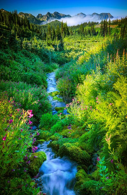 Paradise Creek in Mount Rainier National Park