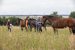 Snepvangers Kristy, Hengsten, ruinen<br /> Millstream Stables - Bergen op Zoom 2021<br /> © Hippo Foto - Dirk Caremans<br /> 23/06/2021